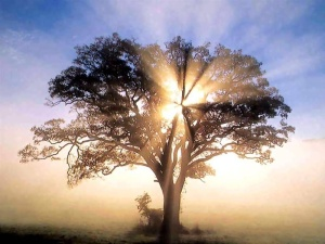 Tree Praise