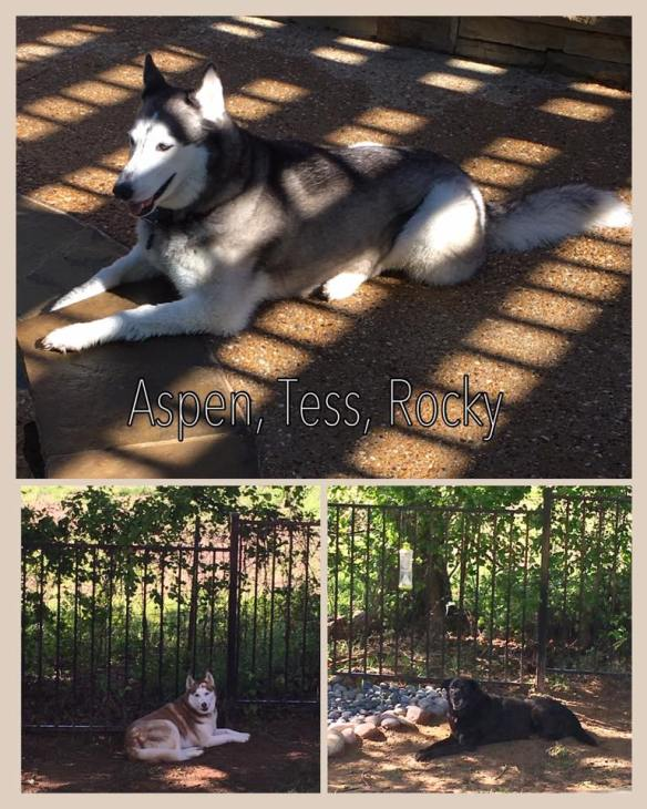 Aspen and Tess and Rocky - April 2017